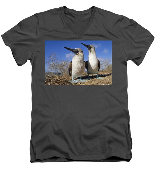 Blue-footed Booby Courting Couple Men's V-Neck T-Shirt by Tui De Roy