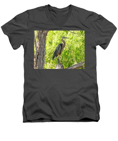 Blue Heron At Rest Men's V-Neck T-Shirt