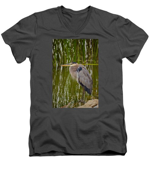 Blue Heron Men's V-Neck T-Shirt by Duncan Selby