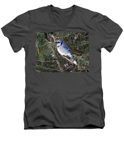 Men's V-Neck T-Shirt featuring the photograph Blue Jay In The Cedars by Brenda Brown