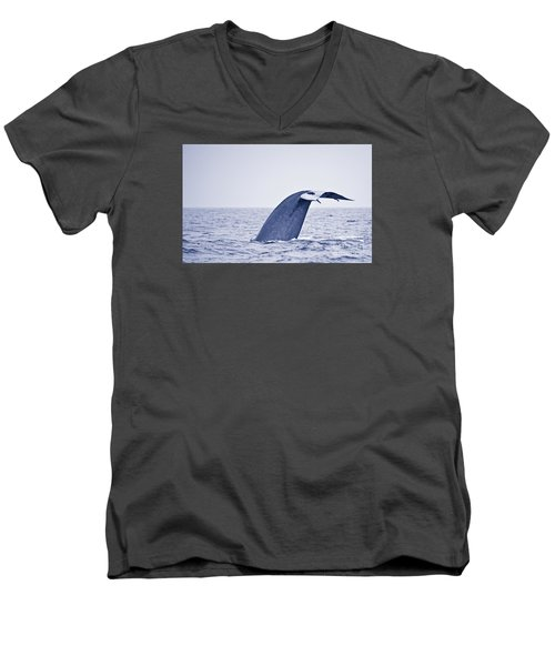 Blue Whale Tail Fluke With Remoras Men's V-Neck T-Shirt by Liz Leyden