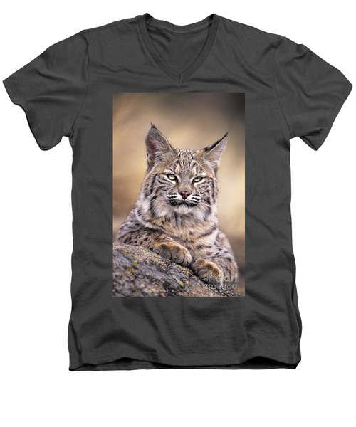 Bobcat Cub Portrait Montana Wildlife Men's V-Neck T-Shirt by Dave Welling