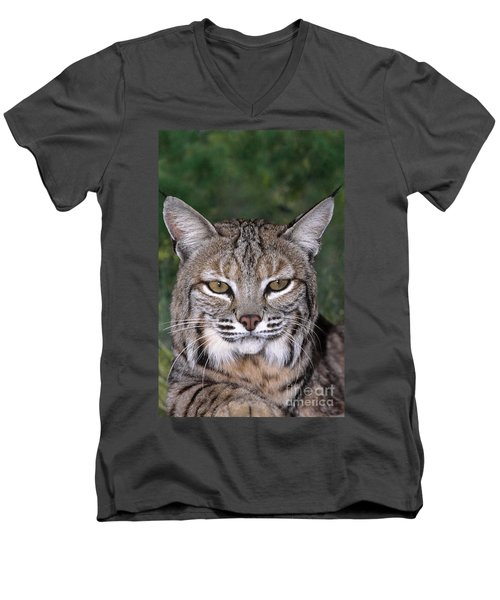Bobcat Portrait Wildlife Rescue Men's V-Neck T-Shirt by Dave Welling