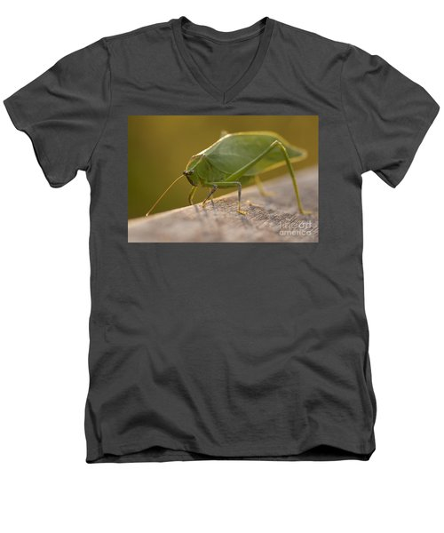 Broad-winged Katydid Men's V-Neck T-Shirt