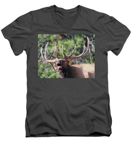 Men's V-Neck T-Shirt featuring the photograph Bugling Bull by Shane Bechler