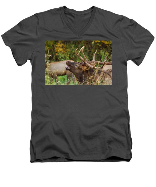Bugling Bull Elk Men's V-Neck T-Shirt by Patrick Shupert