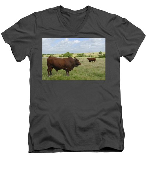 Men's V-Neck T-Shirt featuring the photograph Bull And Cattle by Charles Beeler