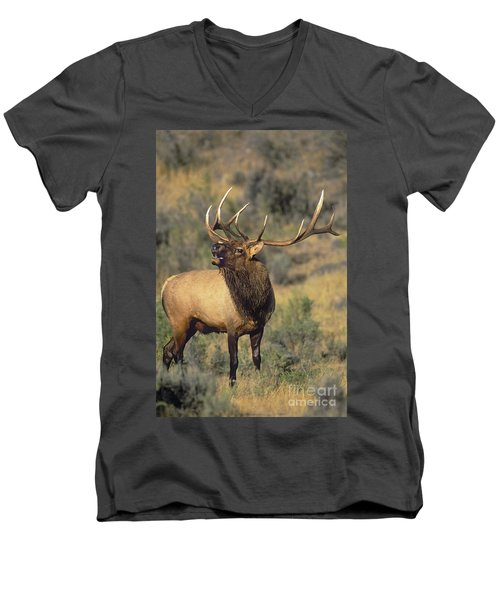 Men's V-Neck T-Shirt featuring the photograph Bull Elk In Rut Bugling Yellowstone Wyoming Wildlife by Dave Welling