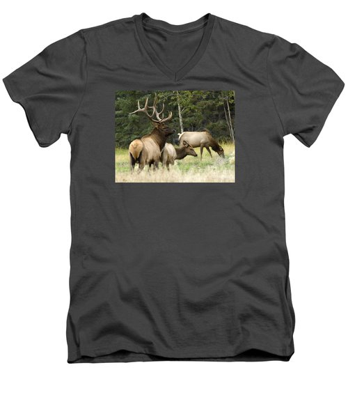 Bull Elk With His Harem Men's V-Neck T-Shirt