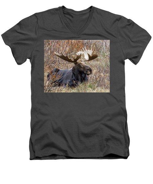 Bull Moose In Autumn Men's V-Neck T-Shirt by Jack Bell