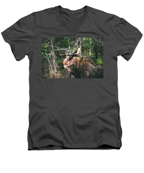 Bull Moose In Spring Men's V-Neck T-Shirt