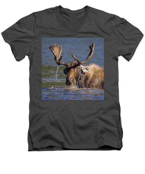 Bull Moose Sampling The Vegetation Men's V-Neck T-Shirt by Jack Bell