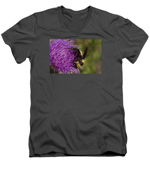 Bumble Bee On Thistle Men's V-Neck T-Shirt by Shelly Gunderson