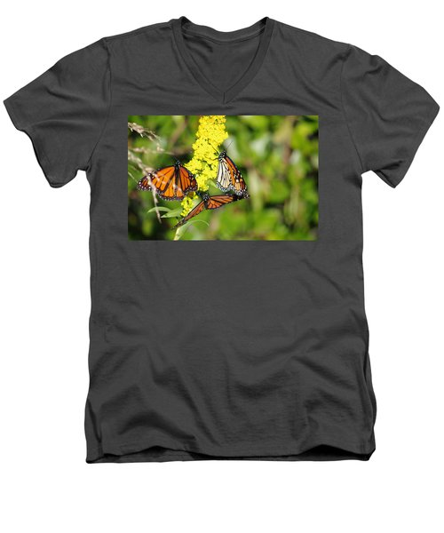 Butterflies Abound Men's V-Neck T-Shirt