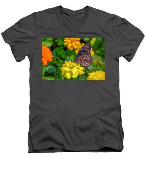 Butterfly On Yellow Marigold Men's V-Neck T-Shirt