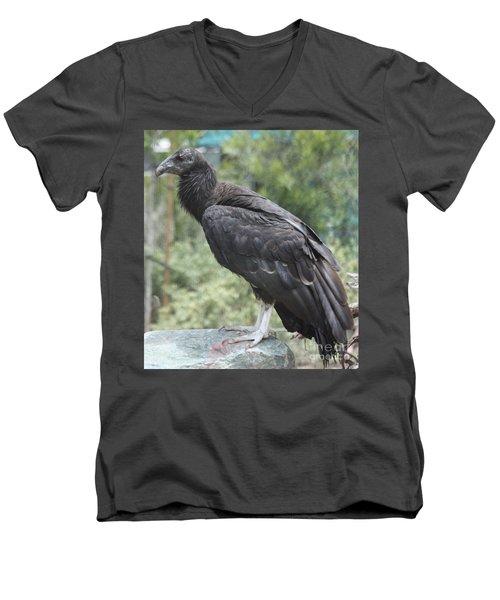 California Condor Men's V-Neck T-Shirt