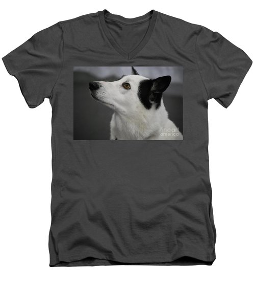Canaan Dog Men's V-Neck T-Shirt