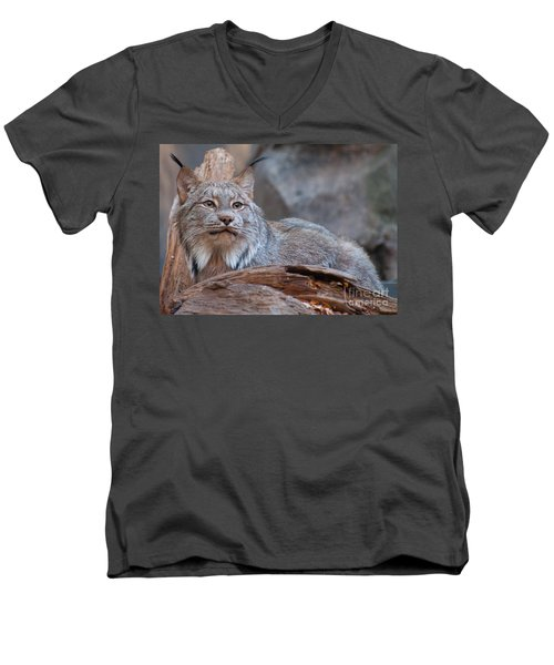 Men's V-Neck T-Shirt featuring the photograph Canada Lynx by Bianca Nadeau
