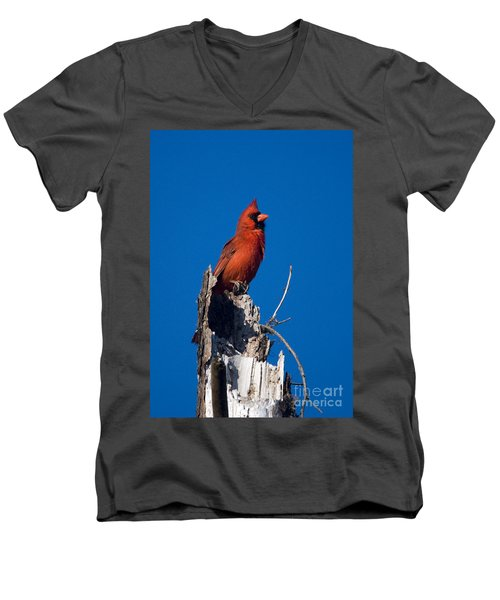Cardinal On Honeymoon Island Men's V-Neck T-Shirt