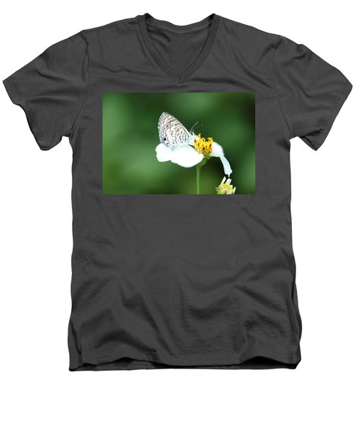 Men's V-Neck T-Shirt featuring the photograph Cassius Blue On Wildflower by Greg Allore