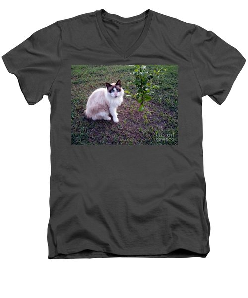 Men's V-Neck T-Shirt featuring the photograph Cat 'n Orange Tree by Joseph Baril