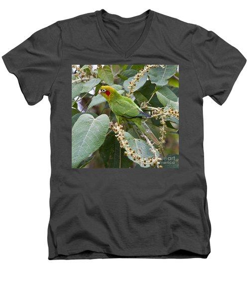 Chiriqui Conure 2 Men's V-Neck T-Shirt