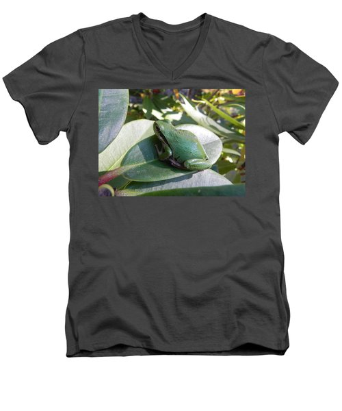 Chorus Frog On A Rhodo Men's V-Neck T-Shirt by Cheryl Hoyle