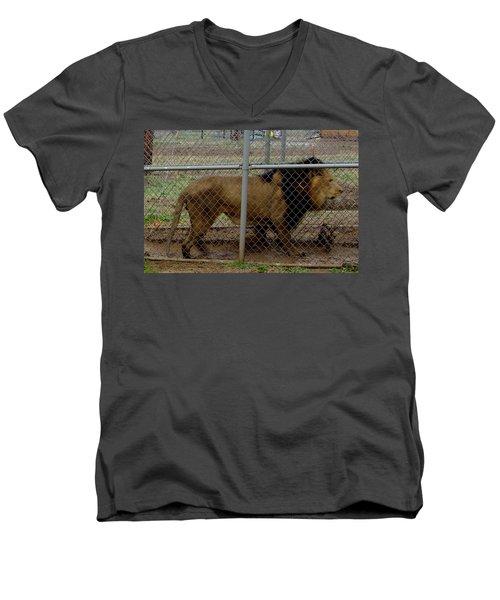 Christmas Lion Men's V-Neck T-Shirt