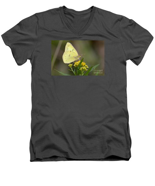Clouded Sulphur Men's V-Neck T-Shirt by Randy Bodkins