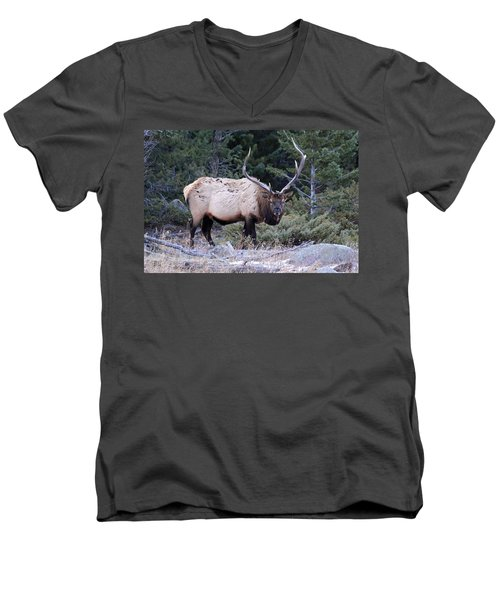 Colorado Bull Elk Men's V-Neck T-Shirt