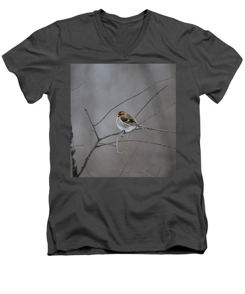 Men's V-Neck T-Shirt featuring the photograph Common Redpoll by David Porteus