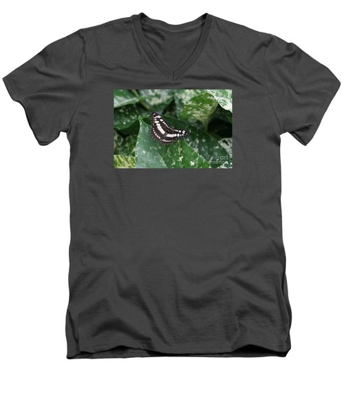 Common Sergeant Butterfly Men's V-Neck T-Shirt
