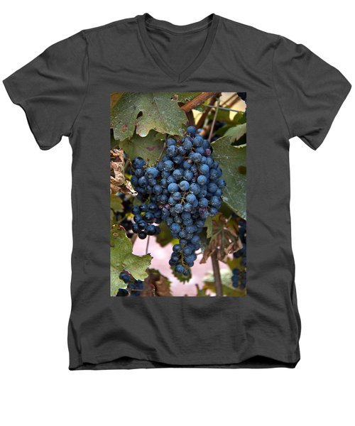 Concord Grapes Men's V-Neck T-Shirt