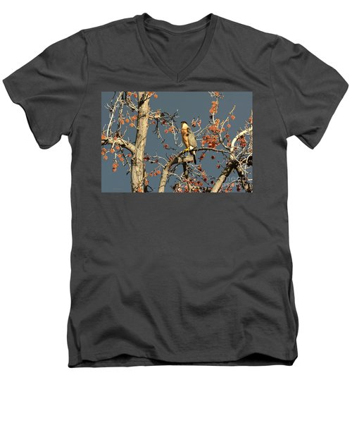 Cooper's Hawk Catches Sun In Stormy Sky Men's V-Neck T-Shirt by Susan Wiedmann