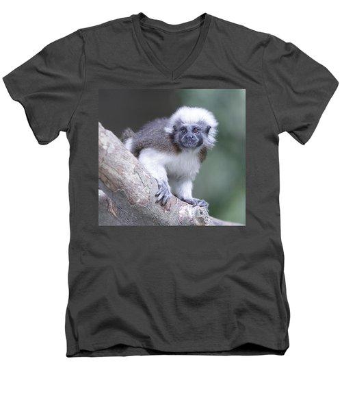 Cotton Top Tamarin  Men's V-Neck T-Shirt