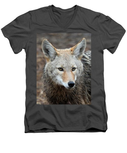 Men's V-Neck T-Shirt featuring the photograph Coyote by Athena Mckinzie
