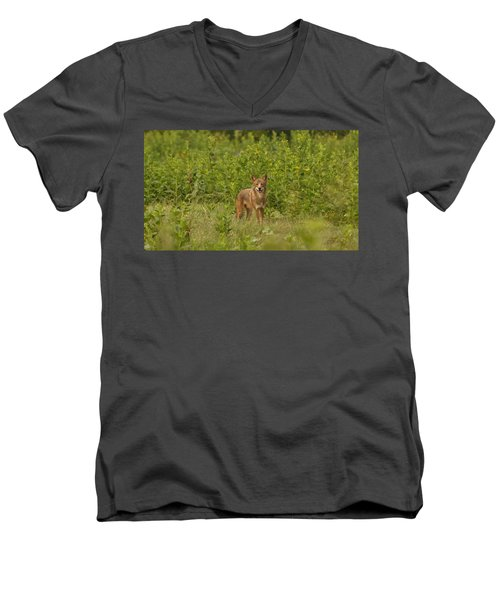 Coyote Happy Men's V-Neck T-Shirt