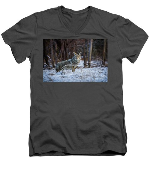 Men's V-Neck T-Shirt featuring the photograph Coyote In The Meadow  by Vincent Bonafede