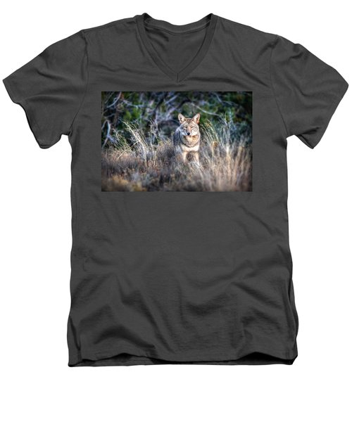 Coyote Stare Down Men's V-Neck T-Shirt