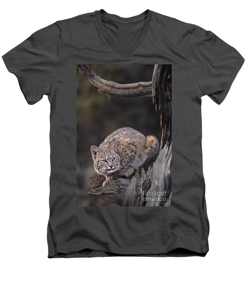 Men's V-Neck T-Shirt featuring the photograph Crouching Bobcat Montana Wildlife by Dave Welling