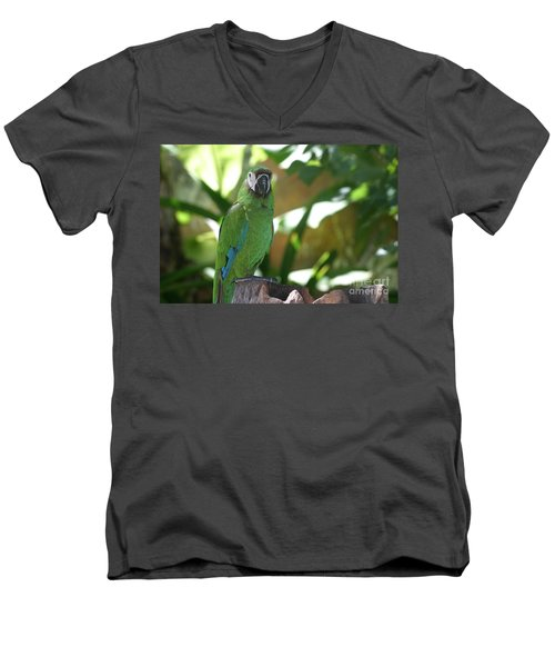 Curacao Parrot Men's V-Neck T-Shirt