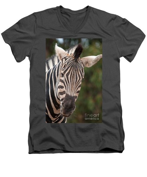 Curious Zebra Men's V-Neck T-Shirt
