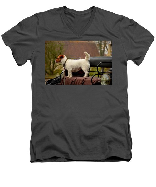 Cute Dog On Carriage Seat Bruges Belgium Men's V-Neck T-Shirt