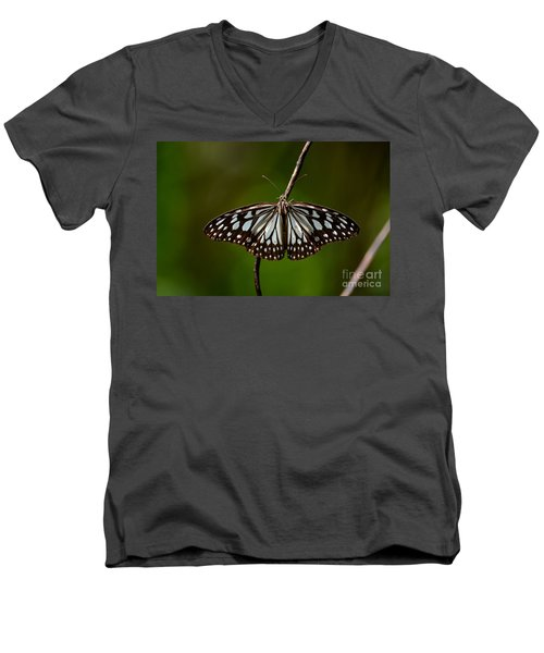 Dark Glassy Tiger Butterfly On Branch Men's V-Neck T-Shirt