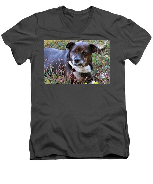 Men's V-Neck T-Shirt featuring the photograph Dogg by Bonnie Willis