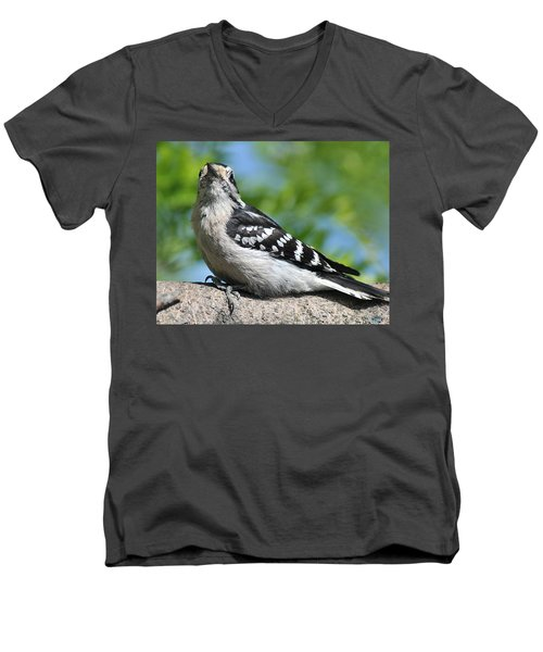 Downy Woodpecker 302 Men's V-Neck T-Shirt
