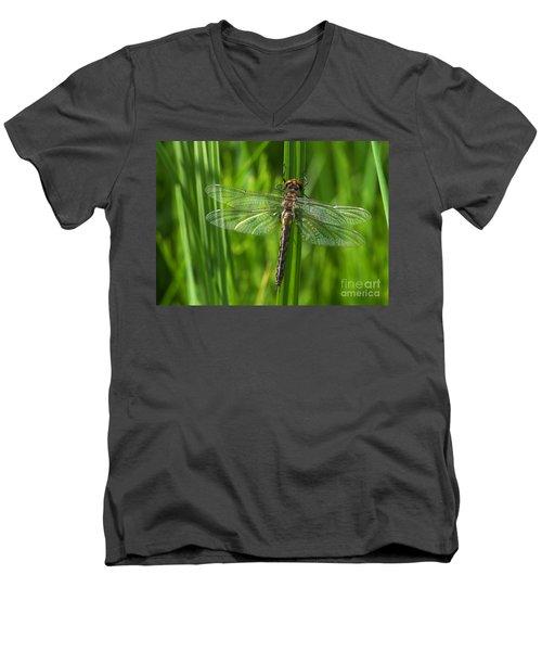Dragonfly On Grass Men's V-Neck T-Shirt