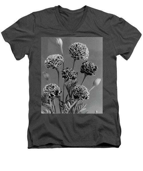 Dwarf Monarch Marigolds Men's V-Neck T-Shirt