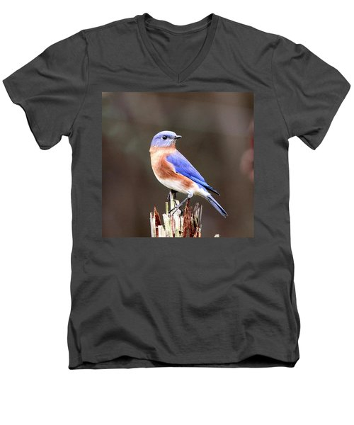 Eastern Bluebird - The Old Fence Post Men's V-Neck T-Shirt by Travis Truelove