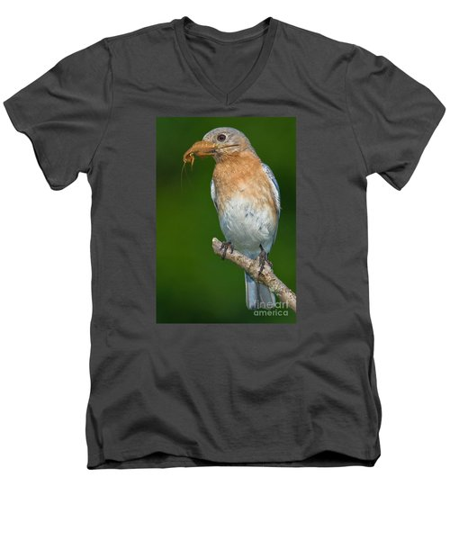 Men's V-Neck T-Shirt featuring the photograph Eastern Bluebird With Katydid by Jerry Fornarotto